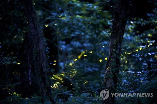 [#꿀잼여행] 수도권: 고요한 밤 하늘에 반짝반짝…인천대공원 반딧불이 합창