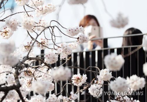사회적 거리 두기 충북 봄 축제·행사 줄줄이 취소 또는 연기(종합)