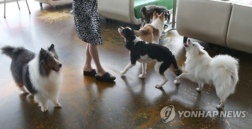 In this photo taken on July 15, 2016, a group of dogs greets their owner at a pet cafe in Suwon, 46 km south of Seoul. (Yonhap)