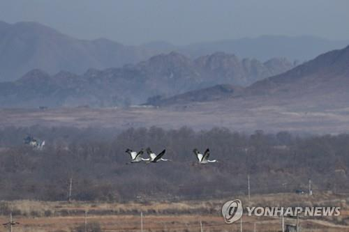 White-naped cranes fly over the Demilitarized Zone in this undated file photo. (Yonhap)