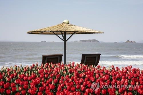 전남 신안 튤립 축제