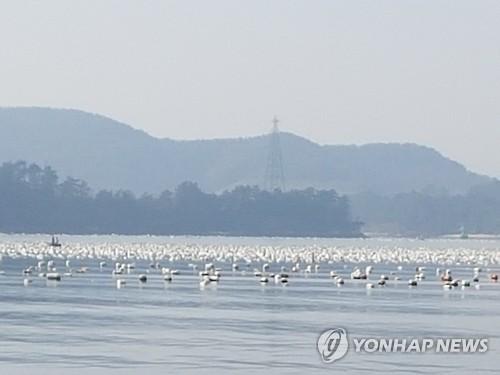경남 통영 앞바다 양식장 스티로폼 부이