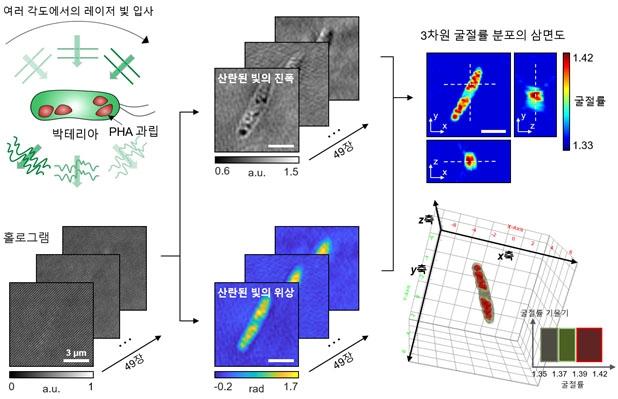 미생물 내 바이오 플라스틱 생성과정 관찰 모식도