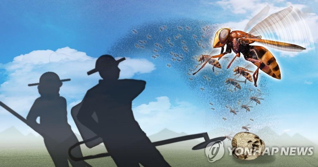 벌초ㆍ제초작업 중 벌 피해 (PG)
