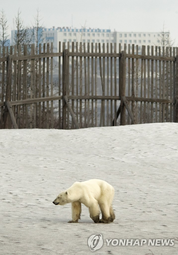 RUSSIA-POLAR BEAR/