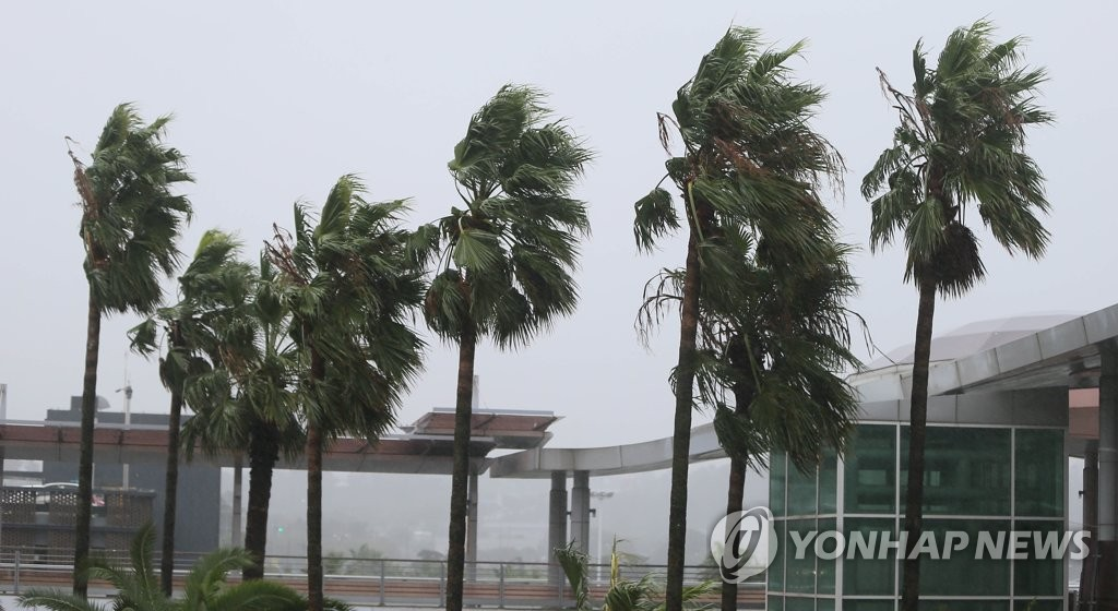 Palm trees sway from strong winds on South Korea's southern island of Jeju on Sept. 22, 2019, as Typhoon Tapah approaches the country. (Yonhap)