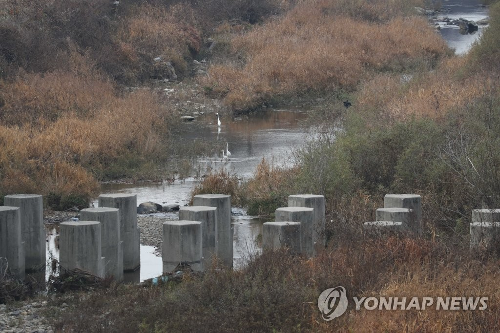 This photo, taken on Nov. 12, 2019, shows a tributary to the Imjin River near the inter-Korean border partly polluted with blood from carcasses of pigs that were culled and poorly handled during an operation to curb the spread of African swine fever (ASF). (Yonhap)